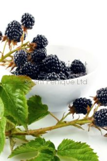 Blackberry & Bay CONC