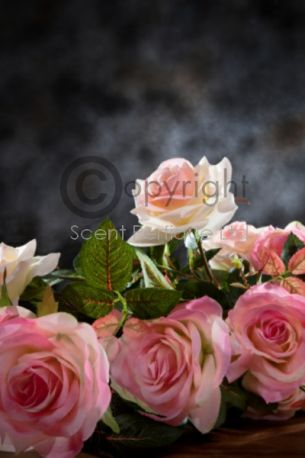Cassis Roses
