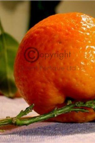 Orange Basil