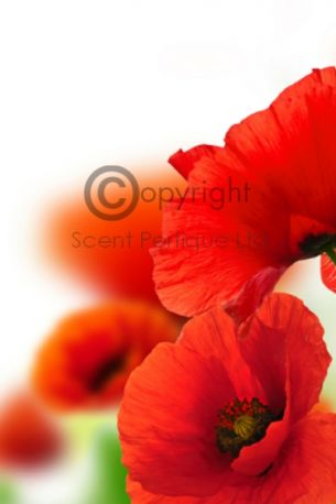 Peppered Poppies