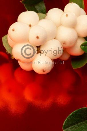 Snowberry & Mistletoe