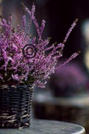 amber lavender