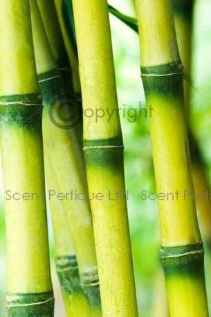 Golden Bamboo Fragrance Oil