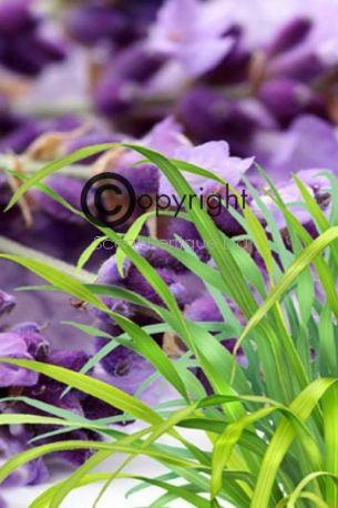 lavender-lemongrass