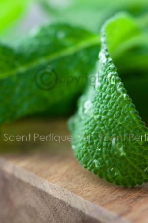 Vanilla Cedarwood & Sage Fragrance Oil