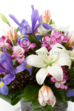 white lilac & rubarb
