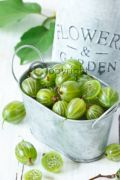 Gooseberry & Elderflower