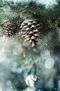 Snow Forest Fragrance Oil