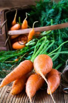 Carrot Blossom & Fennel Fragrance Oil