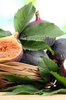 Wild Fig