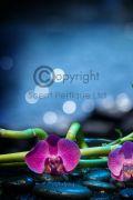 black orchid raspberry & Lemon