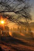 WINTER MORNING FRAGRANCE OIL