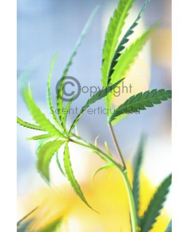 Canabis Flower