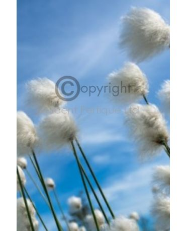Cleancotton