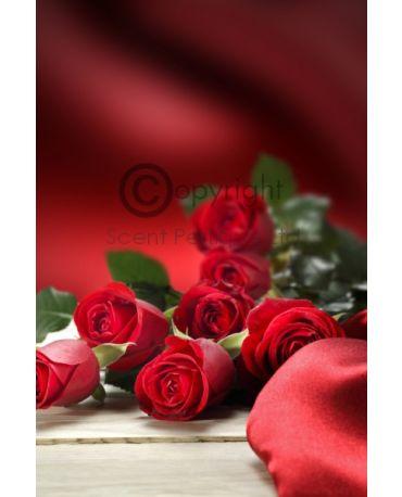 Rose Velvet & Oudh Conc