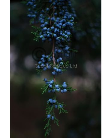 Aromatic Juniper & Cedarwood