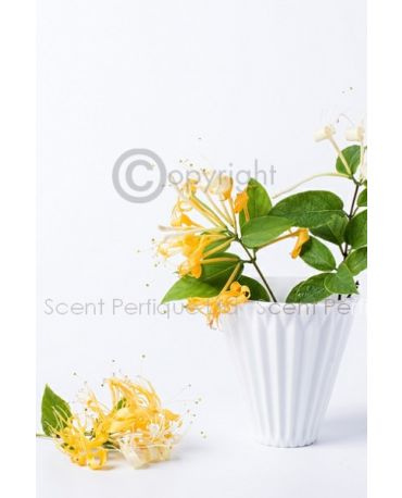 Honeysuckle Petals CONC Fragrance Oil