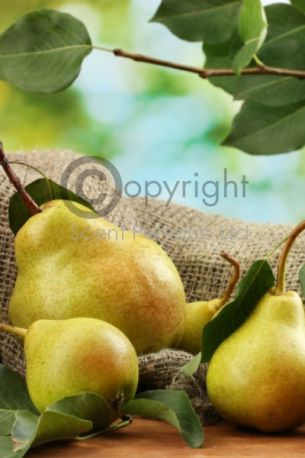 English Pear CONC