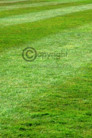 Freshly Mown Grass