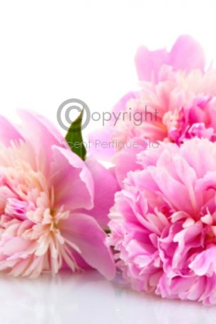 Pink Peony Blush Suede