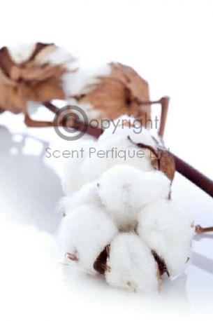 Pure Cotton2