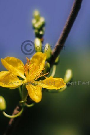 Apricot & Mandarin Blossom Dreamz Fragrance Collection