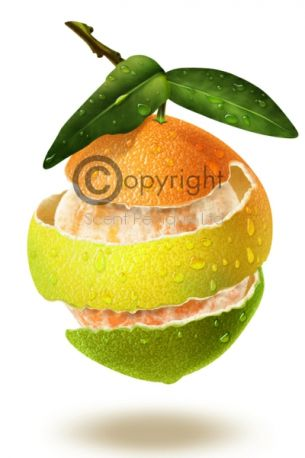 grapefruit-orange-peel