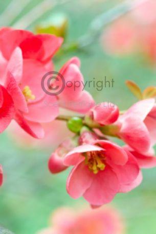 pink grapefruit & Basil