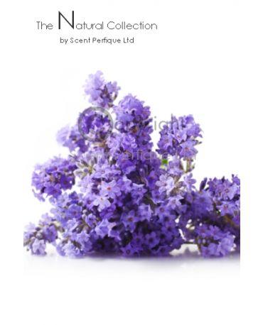 Fleur de Lavender