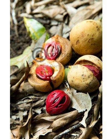 Patchouli-Nutmeg-Ginger