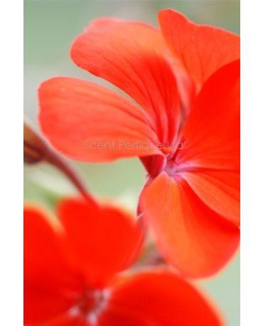 Patchouli Orange Blossom