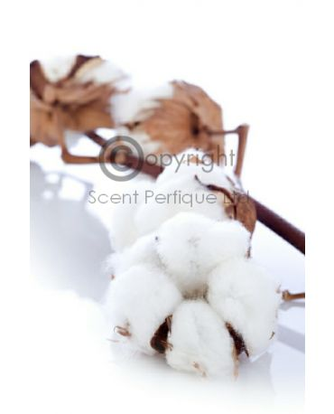 Pure Cotton2