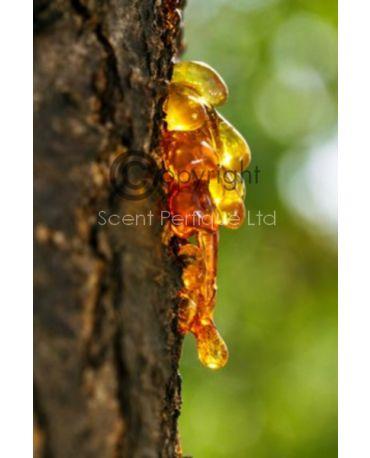 Amber CONC Fragrance Oil