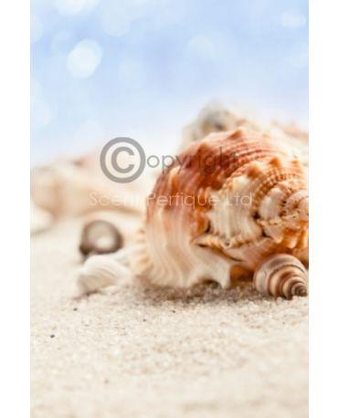 sandy-beach-fragrance-oil