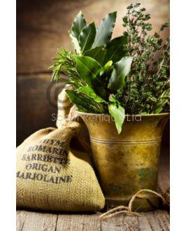 Fresh Thyme & Cedar