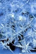 Ice Musk