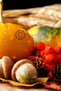 Pumpkin & Chestnut