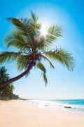 Tropical-waters